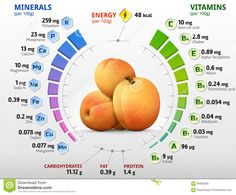 Vitamins And Minerals Of Apricot Fruit Stock Vector - Illustration of food, data: 90563369 Health Diet, Health And Nutrition, Quest Nutrition, Green Fruits And Vegetables, Mineral Chart, Apricot Fruit, Nutrition Chart, Canela, Medicinal Plants