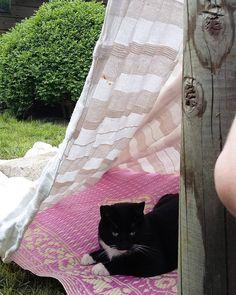 Dan bouw je een hut in de tuin en je hebt meteen visite  #cat #catlove #Kitty #kat #instacat #home #garden #tuin #jardin