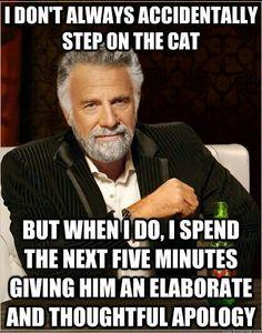 Cat stuff BAHAHAHAHAhahahahaha Things that just about make me pee myself