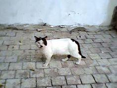 Tel Aviv Mustache Alley Cat. I warned you. Goofy isn't it.