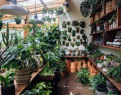 It&Apos;S just one of those days for dreaming about plants. Indoor Garden, Indoor Plants, Garden Shop, Home And Garden, Garden Center Displays, Shed Building Plans, Plants Are Friends, Plant Nursery, Plant Decor