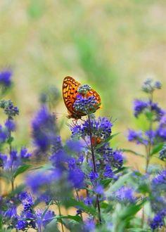 Flower Butterfly Photo Colorado Woodland by JulieMagersSoulen, $20.00