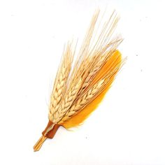 Wheat and Feather Boutonniere