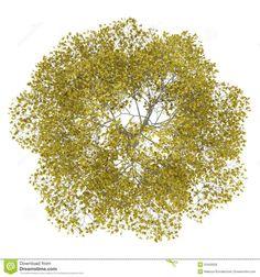 Tree Plan View Png Isolated fall <b>trees</b> - google search  ref  <b>plant</b> cutouts <b></b>