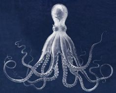 Lord Bodner's Octopus Illustration