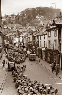 Deja-vu: This classic shot of sheep clattering through Kendal, Cumbria, England Cumbria, Lake District, Barrow In Furness, Modern Farmer, Holiday Places, The Old Days, Old London, England Uk, British History