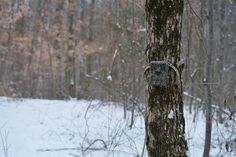 Scouting for deer in the post season can be a game changer. Do you want to know the secret to getting on big bucks year after year? Deer Signs, Deer Tracks, Deer Pictures, Aerial Images, Short Break, Hunting Season, Game Changer, Deer Hunting, Best Location