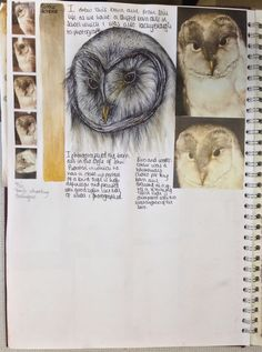 Lauren A level External Assignment. Owl Illustration, Creative Illustration, Natural Form Artists, Natural Forms, Sketchbook Pages, Sketchbook Ideas, Art Sketches, Art Drawings, A Level Art