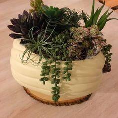 https://coastalkelder.com/2016/09/25/succulent-filled-pumpkin/