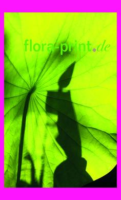 Lotusblume im Gegenlicht