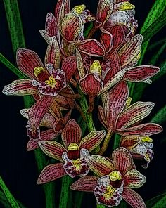 See my Fine Art Macro Photograph of a Red and Yellow Cimbidium Orchid transformed into a Woodcut Artistic Photograph. Woodcut Orchid Macro Photo Fine Art by AdornmentsByEloise on Etsy The direct link is: https://www.etsy.com/listing/232432681/woodcut-orchid-macro-photo-fine-art?ref=shop_home_active_6 Thanks, Eloise ***AdornmentsByEloise***