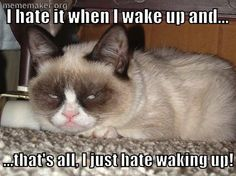 grmpy cat, funny grumpy cat, grumpy cat quotes ....For the funniest quotes and humor pics visit www.bestfunnyjokes4u.com/lol-funny-cat-pic/