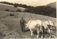 bauern bei der arbeit   St. Nikola Bauern bei der Arbeit von ca.1940 bis 1965   St. Nikola TV