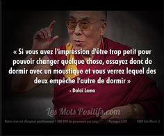 moustique. Dalaï Lama