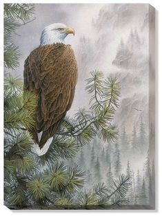 www.wildwings.com DirectionsWEB fn_webcart_zoomImage.php?img=bald-eagle-wrapped-canvas-art-high-mountain-sentinel-by-susan-bourdet-F085275432d.jpg