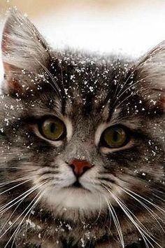 Flurries for Furries