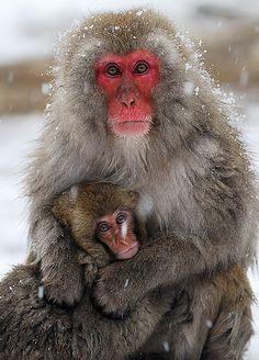 okasan...snow monkeys