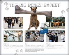 Unconventional Marketing: un cane fa pubblicità con un osso di dinosauro