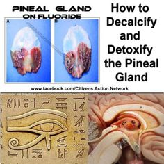 HOW TO DECLARIFY THE PINEAL GLAND FLOURIDE