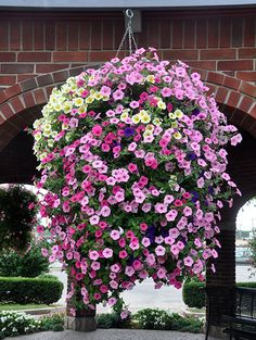 hanging baskets My nanny and Grandaddy always had purple and white petunias that were so hardy they spread like weeds! Petunia Hanging Baskets, Hanging Basket Garden, Hanging Plants Outdoor, Plants For Hanging Baskets, Hanging Flowers, Diy Hanging, Container Flowers, Flower Planters, Container Plants