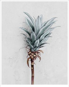 NEWS Ananas Comosus poster from Vee Speers Tap the photo to buy the poster easily and quickly  #photoart #veespeers #vissevasse