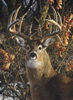 Carl-Brenders-AN-AUTUMN-GENTLEMAN-White-Tail-Deer-Buck-in-Rut-Canvas