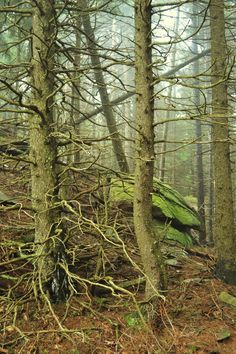 A Twisted Wood by wagn18.deviantart.com on @deviantART