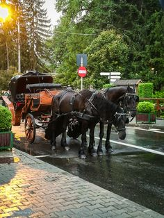 Tourist Places, Medieval, Horses, World, Amazing, Travel, Animals, Beautiful, Naturaleza
