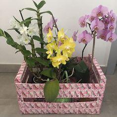 Plants, Fruit Crates, Napkins, Flora, Plant, Planting