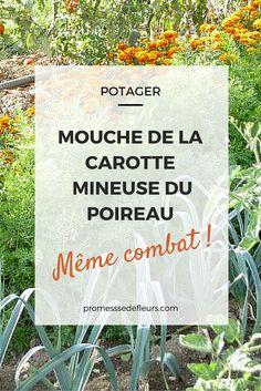 Un problème avec la mouche de la carotte et la mineuse du poireau ? Voici nos conseils pour protéger vos cultures au potager