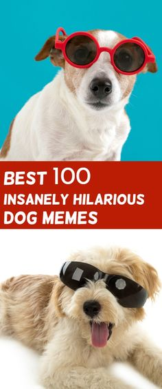 wholesome Dog Memes Do you love Dogs? Well you will surely enjoy these super hilarious latest funny memes Memes Humor, Funny Dog Memes, Funny Dogs, Hilarious Jokes, Funny Boxer, Funny Puppies, Funny Cartoons, Lol So True, Dog Memes Clean