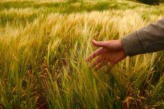 Primeira parte de um texto elaborado por Hugo Oliveira sobre os organismos geneticamente modificados e as polémicas a eles associadas. Partilhar isto:EmailFacebookTwitterGoogleRedditTumblrPinterest…