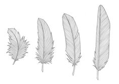 Final sketches • Feather collection