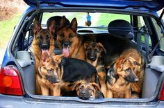 .....a car full of Germans.... I want a car full of German's too!!!