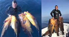 Great dusky groupers awesome catch