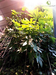 Jungla zieleni w biurowcu Oxygen Park - wrzesień 2014