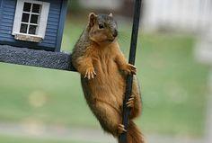 Este esquilo parece saber relaxar e aproveitar a vida. (Foto: logs.roanoke.com)