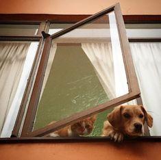 Qué nos trajiste? Lucy y Totopo. #mascotas #petsagram #pets #cute #catstagram #cat #dog #tabby #labrador #home #homies #roomies #catsofinstagram #dogsofinsta #beautiful #awesome #nice #shot #picoftheday #bestoftheday #love #photo