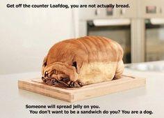 Loafdog