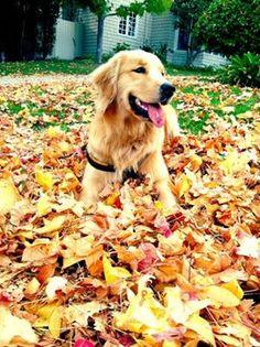 Just enjoying the fall!