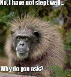 Sleepless monkey