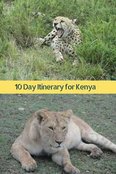 10 Days in Kenya - Complete done for you itinerary to explore flora and fauna of Kenya!