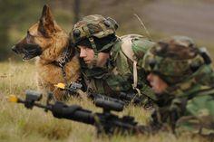 Army Shepherd