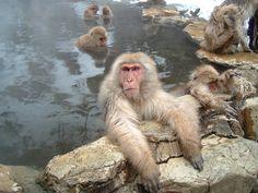 Nagano.    長野の温泉猿、僕と同様、裸です