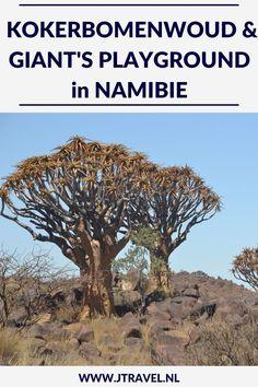Een paar aparte natuurfenomenen in Namibië zijn het Kokerbomenwoud en Giant's Playground. Op mijn website lees je hier meer over. Lees je me? #kokerbomenwoud #giantsplayground #namibie #jtravel #jtravelblog