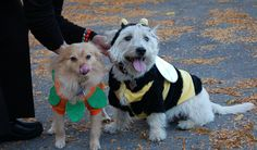 Important Halloween Safety Tips from Veterinarians