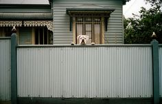 """Jesse Marlow is a street photographer based in Melbourne, and a member of In-Public. He recently published his book: """"Don't Just Tell Them, Show Them. Farmhouse Architecture, Marlow, Street Photographers, Book Photography, Colour Photography, White Photography, Peek A Boos, Portrait, Great Photos"""
