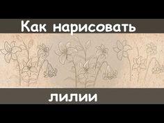 Как нарисовать лилию карандашом поэтапно - YouTube