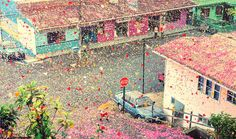 This little town was in for a treat when 8 Million Flower Petals Rain Down On A Village In Costa Rica