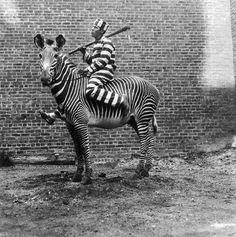Zebra Cebra prison lines black&white black white Humor Vintage, Funny Vintage Photos, Photo Vintage, Vintage Photographs, Weird Vintage, Vintage Ads, Vintage Black, Vintage Items, Black White Photos